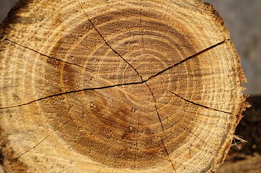 Wood, Tribe, Cut, Brown, Heartwood, Crack, Plant
