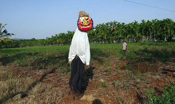 Scarecrow, Plantation, Areca Nut, Areca Palm
