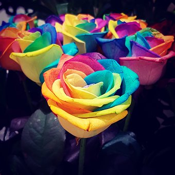 Roses, Rainbow, Flowers, Colours, Beautiful, Heaven