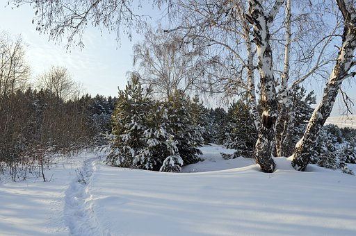 Snow, Woods, Winter, Tale, Drifts, Background