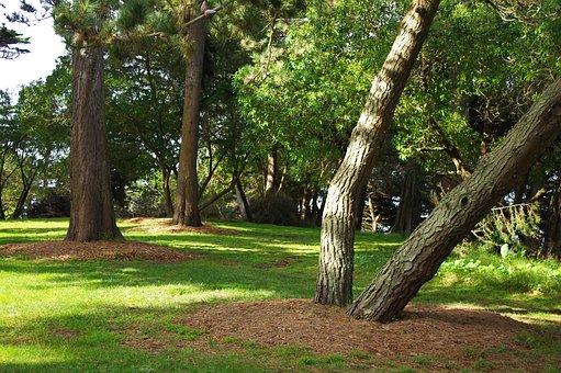 Sutro Park, San Francisco, Trees, Shade, California