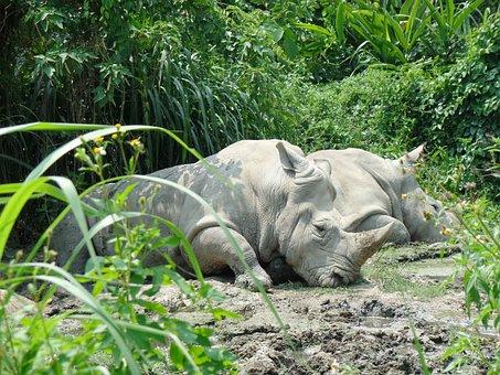 Rhino, Mud, Zoo, Wildlife, Aminal, Animal