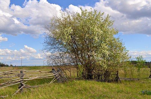 Landscape, Fence, Hedge, Old, Wood, Flowers, Summer