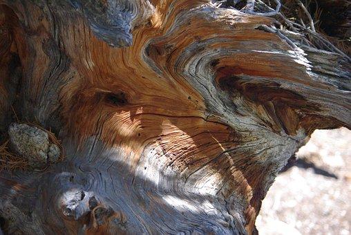 Wood, Sculpture, Drift Wood, Wooden, Decorative