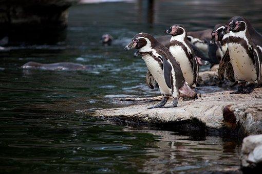 Animal, Animals, Antarctica, Beaks, Bird, Birds, Cold