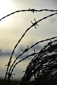 Wire, About, Farm, Cattle, Metallic Yarn, Barbs