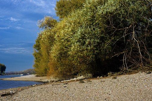 Rhine, River, Beach, Gravel Bank