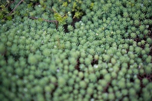 Succulent Plants, Plant, Bowl Pick