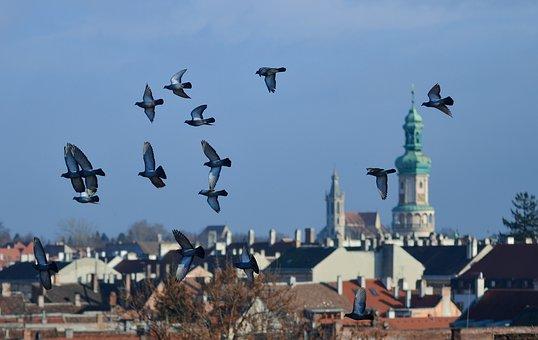 Spring, Sopron Hungary, Hungary, Doves, City, Light