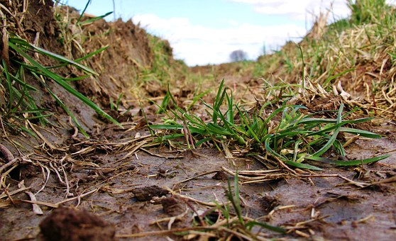 Lane, Furrow, Close, Grass