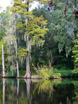 Swamp, Bald Cyprus Tree, Spanish Moss, Epiphyte, Pond