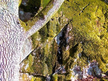 Moss, Stone, Tree, Green, Långholmen, Stockholm
