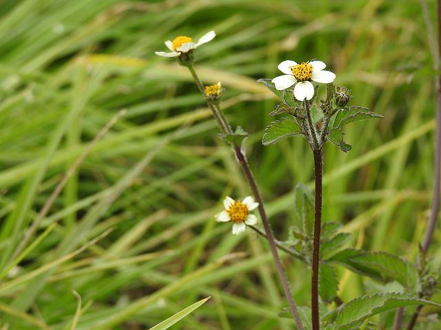Flowers, Flower, White Flower, Field, Delicate Flower