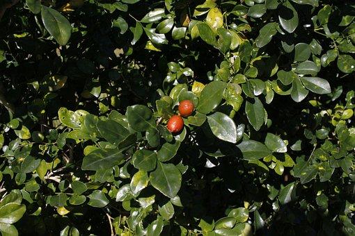 Fruit Fact, Views, Underbrush, Foliage