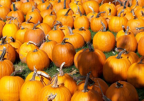 Pumpkins, Autumn, Fall, Orange, Fruits, Bright