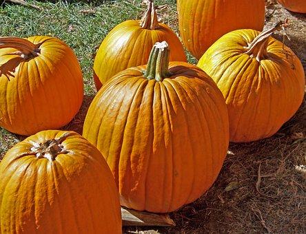 Pumpkins, Orange, Fruits, Bright, Sunlight, Light