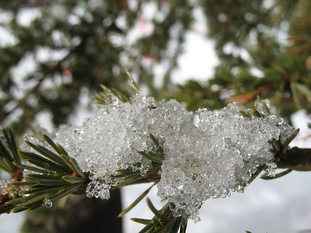 Pine, Snow, Macro, Ice Cream, Frozen