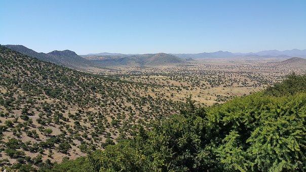 Morocco, Argan, Trees, South