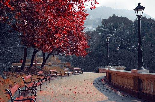 Park, Season, Autumn, Nature, Fall, Landscape, Outdoor