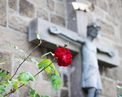 Rose, Cross, Jesus, Christ, Faith, Hope, Suffering