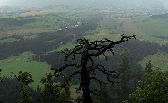 Slovakia, Tree, Liptov, Countryside, View, Panorama