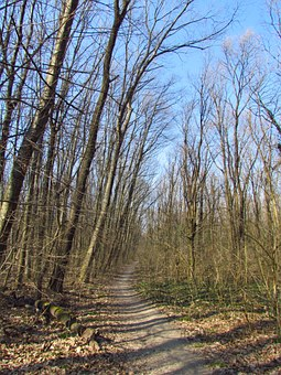 Spring, Forest, Tour, Nature, Green, Deciduous, Wood