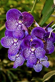 Orchid, Vanda, Exotic, Color, Flower, Plant, Tropical