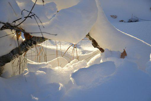 Winter, Sunbeam, Snow, Forest, Siberia, Nature