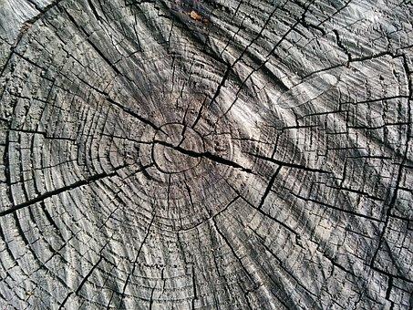 Wood, Log, Like, Annual Rings, Sawed Off, Tree, Tribe