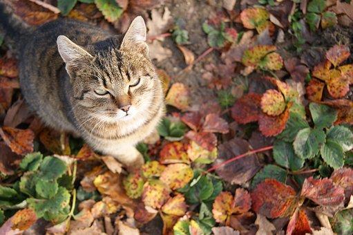 Cat's Eyes, Cat, Inmate, Foliage, Strawberries, Autumn
