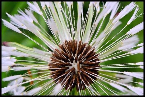 Flower, Seeds, Close-up, Macro, Nature, Flora, Botany