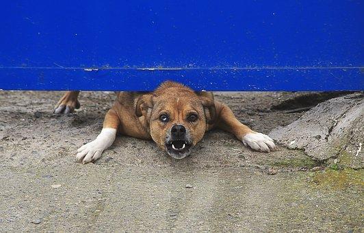 Dog, Animal, Canidae, Domestic Animal, Teeth