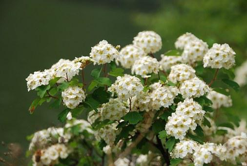 Flower, Flowers, Plant, A Cluster Of Flowers