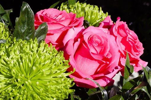 Roses, Composites, Flowers, Spring, Nature, Plant