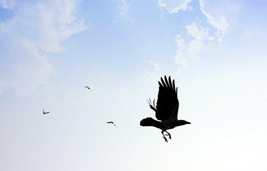 Against, Bird, Blue, Clouds, Flying, Hawk, Sky
