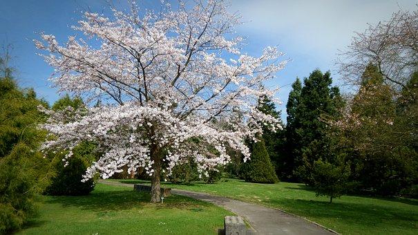 Garden, Tree, Spring, Nature, Botanical Garden