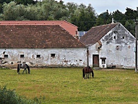 Horses, Animal, Horse, Homestead, Range
