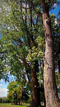 Trees, Nature, Lake, Saint Louis, Montreal, Quebec