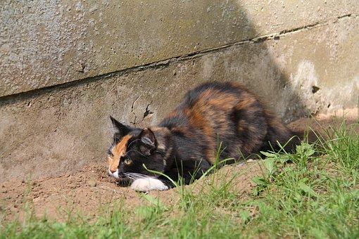 Cat, Pet, Nala