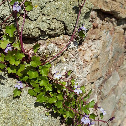 Weeds, Purple, Outdoor, Green, Nature, Natural, Rocks