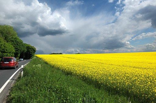 Oilseed Rape, Clouds, Dramatic Clouds, Sky