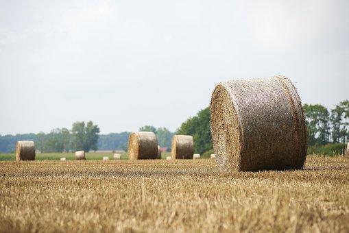 Straw, Straw Bales, Round Bales, Field, Summer, Stubble
