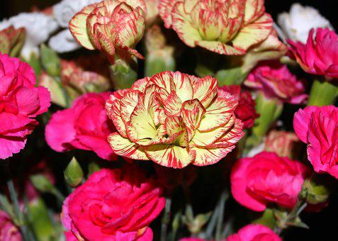 Carnation, Baby Carnation, Flower, Bouquet, Red