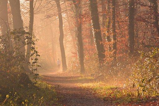 Fog, Forest, Autumn, Leaves, Jog, Run, Trees