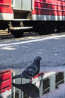 Poland, Railway Station, Train, Wagon, Dove, Water Pool