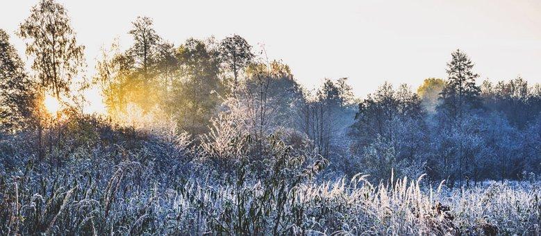 Nature, Winter, Morning, Tree, Frost, Hard Rime, Poland
