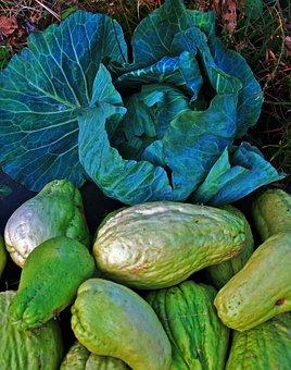Cabbage, Head, Shu-shu, Squash, Vine, Vegetable