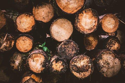 Wood, Log, Holzstapel, Logging, Tree Stump