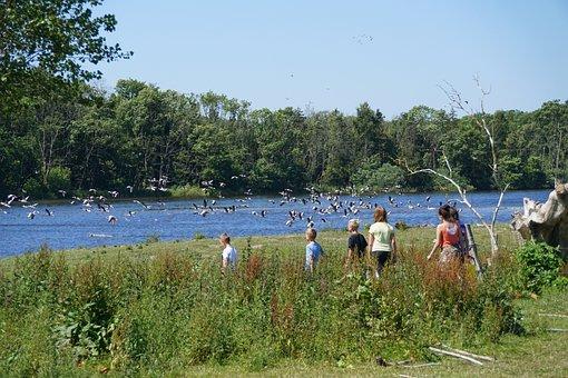 Natural, Children, Birds, Landscape, Lake, Hejrede