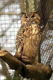 Eagle Owl, Owl, Bird, Animal, Forest, Night, Forests